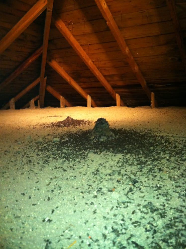 Bat and Wildlife Solutions: 9344 White Lake Rd, Fenton, MI