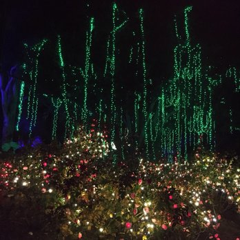 Photo Of LA Zoo Lights   Los Angeles, CA, United States