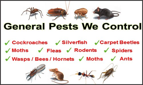 Peace Of Mind Pest Solutions: Amsterdam, NY
