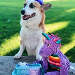 Top 10 Best Dog Birthday Cake In San Diego CA