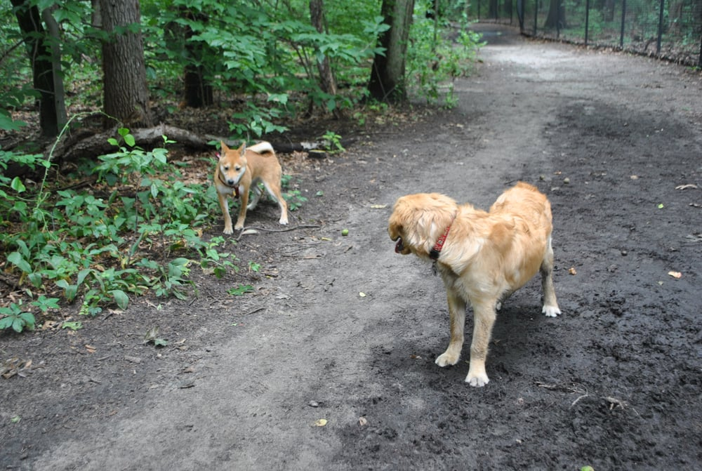 Timber Creek Dog Park Events