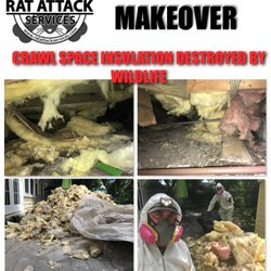 Rat Attack Services - Request a Quote - 12 Photos - Pest