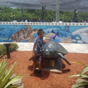 Loggerhead Marinelife Center 401 Photos 111 Reviews Community In Juno Beach Fl