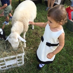 animal affair traveling petting zoo festivals rehoboth ma