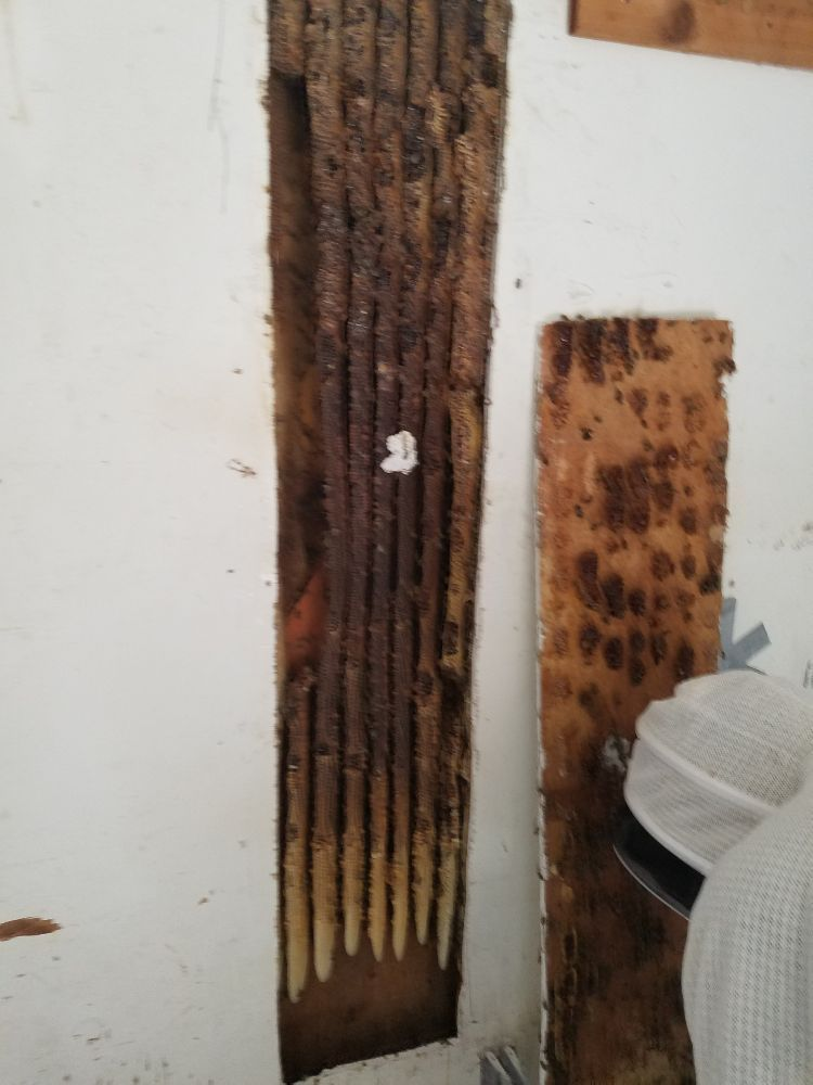 Photo Of Houston Bee Removal Spring Tx United States Tyler Howard And