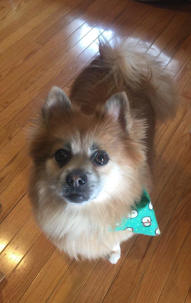 Doggie Day Spa - Mobile Grooming: Bloomingdale, NJ