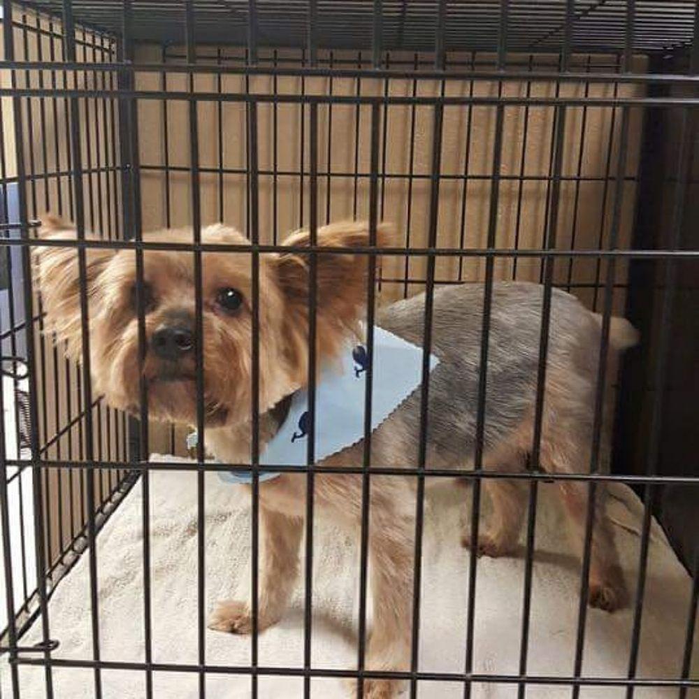 After Glo Pet Salon: 121 Main St, Lovington, NM