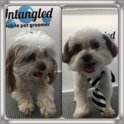 Untangled Mobile Pet Grooming 54 Photos Amp 15 Reviews