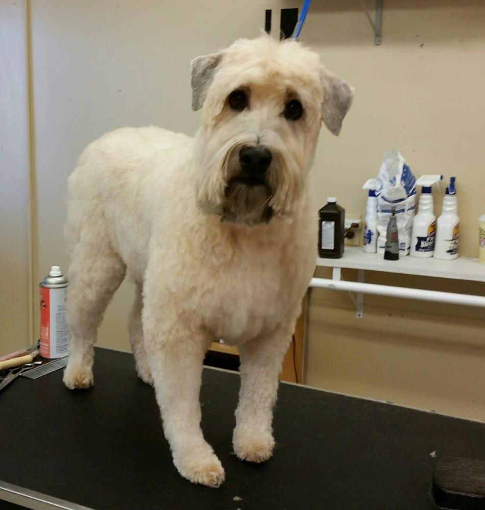 Happy Tailz Full Service Dog Grooming Salon: 209 S Comanche, Bartlesville, OK