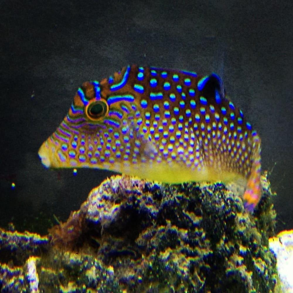 Coral Logic Aquariums: 7860 Gate Pkwy, Jacksonville, FL