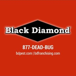 Pest Control Indianapolis  Photo of Black Diamond Of Indy Pest Control - Indianapolis, IN, United States.