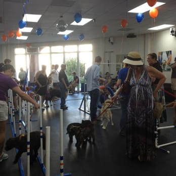 Zoom Room Dog Training Austin Tx