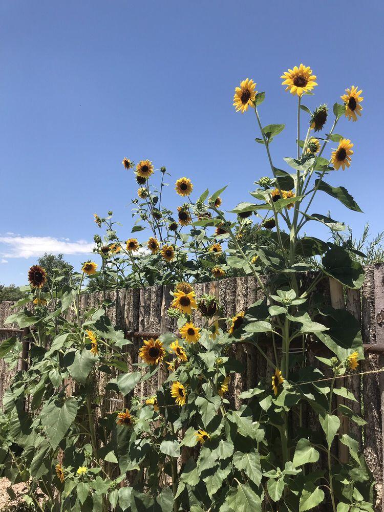 Sunbelt Landscape & Nursery: 4990 Corrales Rd, Corrales, NM