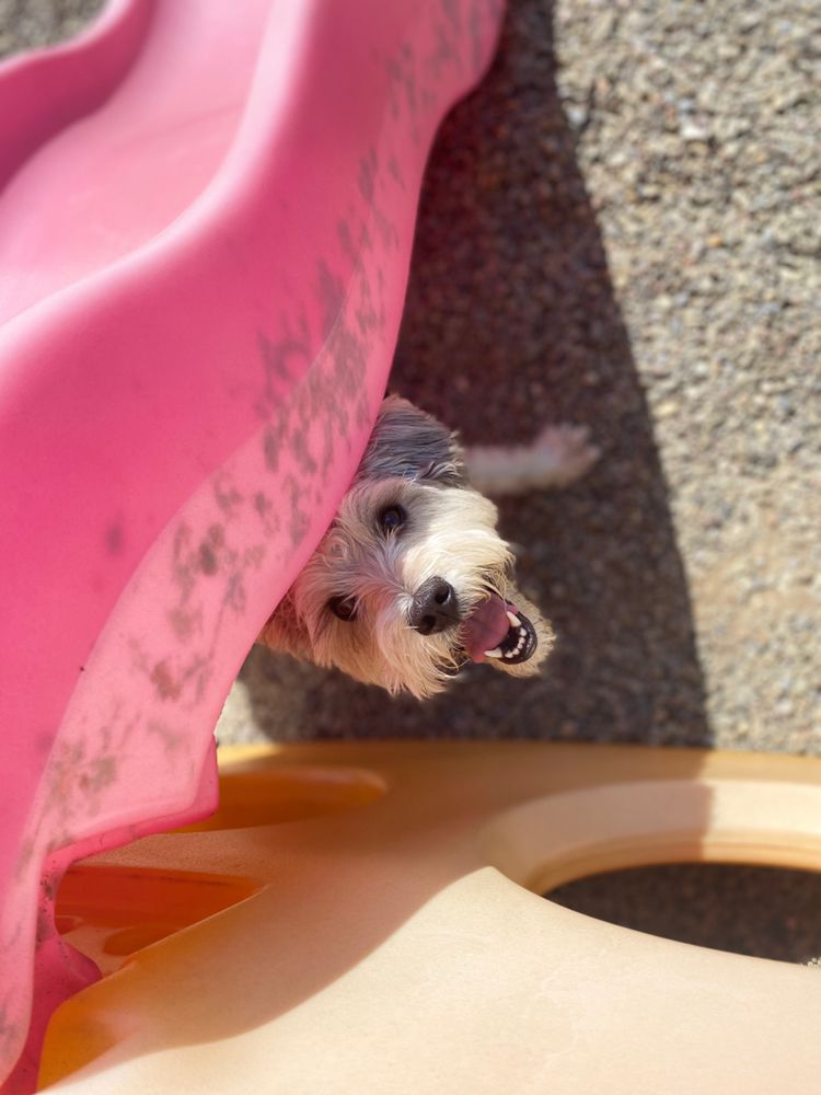 Creature Comforts Pet Resort: 1437 Pontiac Rd, Angola, NY