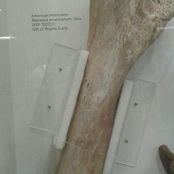 Lick museum bone Big