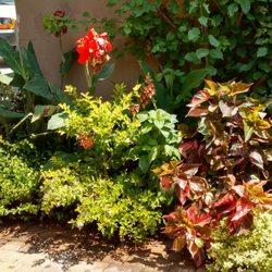 Photo Of Natural Aspect Gardenscape   San Diego, CA, United States.