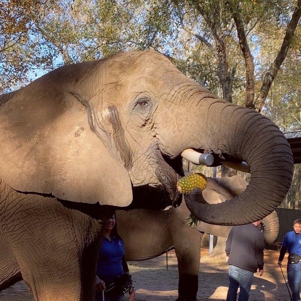 East Texas Elephant Experience: 14041 Hwy 105 E, Cut and Shoot, TX