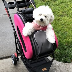 California Bichons - 14 Photos - Pet Breeders - Colfax, CA