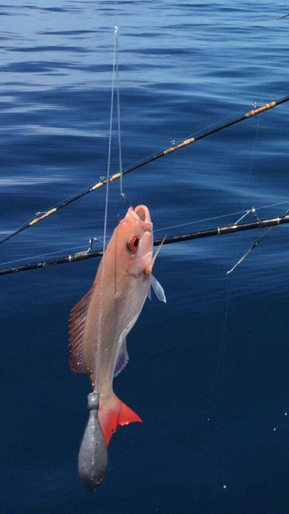 Jubilee deep sea fishing 26 31 3605 thomas for Jubilee deep sea fishing