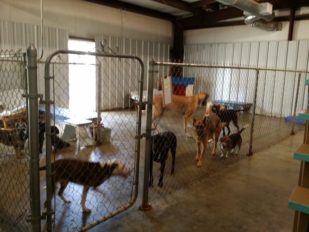 Lucky Dog Company: 2004 Brazosport Blvd, Richwood, TX