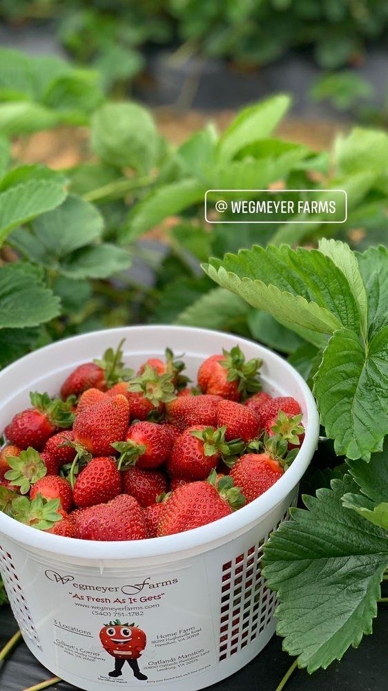 Wegmeyer Farms: 38299 Hughesville Rd, Hamilton, VA