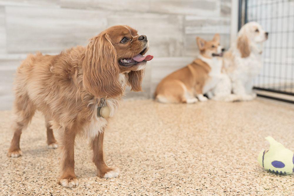 Cedar Run Pet Boarding & Daycare: 2705 Stonegate Ct, Hiawatha, IA