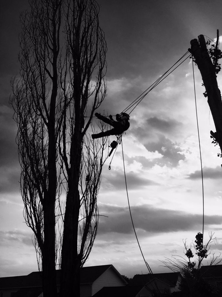Whistler's Tree Experts: Seymour, IN