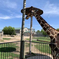 Tanganyika Wildlife Park - 123 Photos & 43 Reviews - Zoos - 1000 S