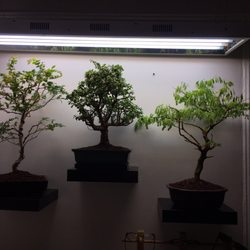 Photo Of Dallas Bonsai Garland Tx United States