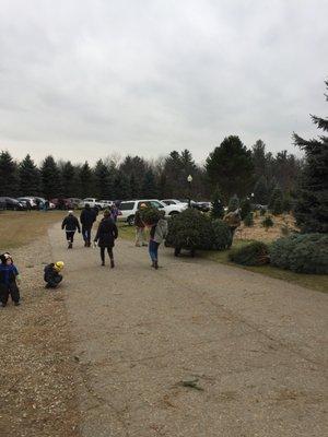 Photos (10) - Addison Oaks Christmas Tree Farm 355 Lake George Rd Oakland, MI