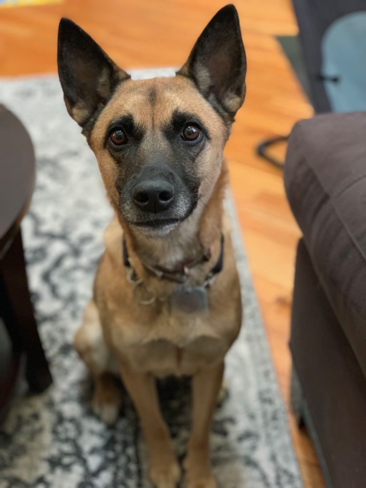 Paws Crossed: 100 Warehouse Ln S, Elmsford, NY