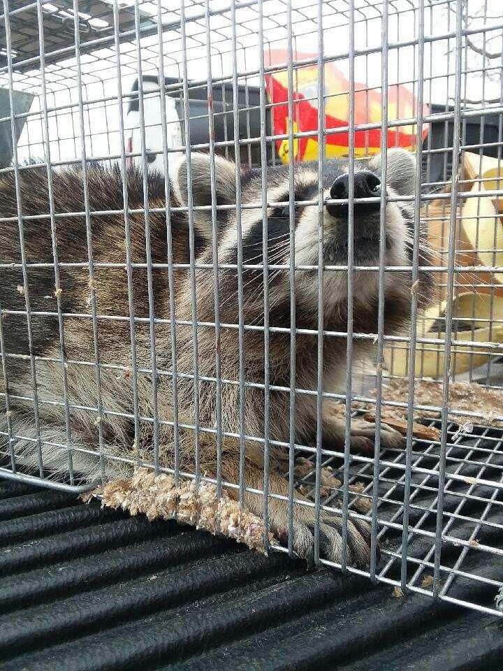 A2Z Critter Gitter: Mansfield, MO