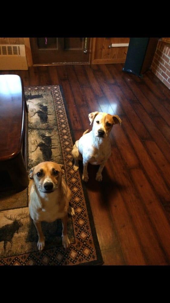 Home Buddies Pet Sitting & Dog Walking