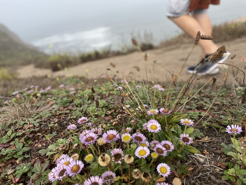 Ross Cove Beach: 280 W Point St, Moss Beach, CA