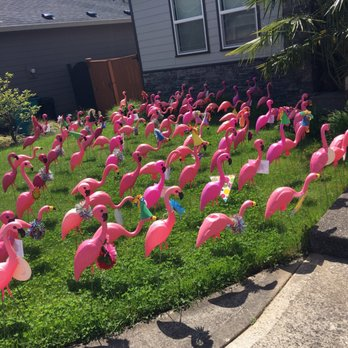 Photo Of Think Pink Flamingo Flocking Portland Or United States Get