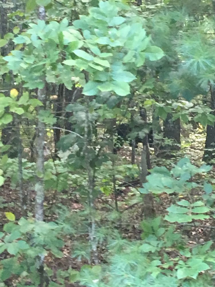 Bandy Creek Campground: Oneida, TN