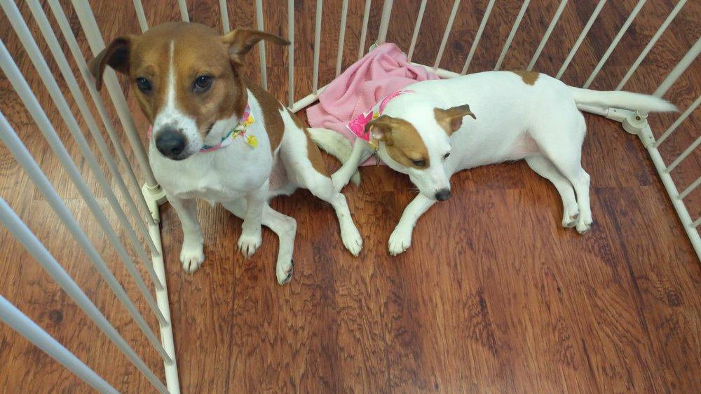 Peace Love & Pets: 8229 E Washington St, Chagrin Falls, OH