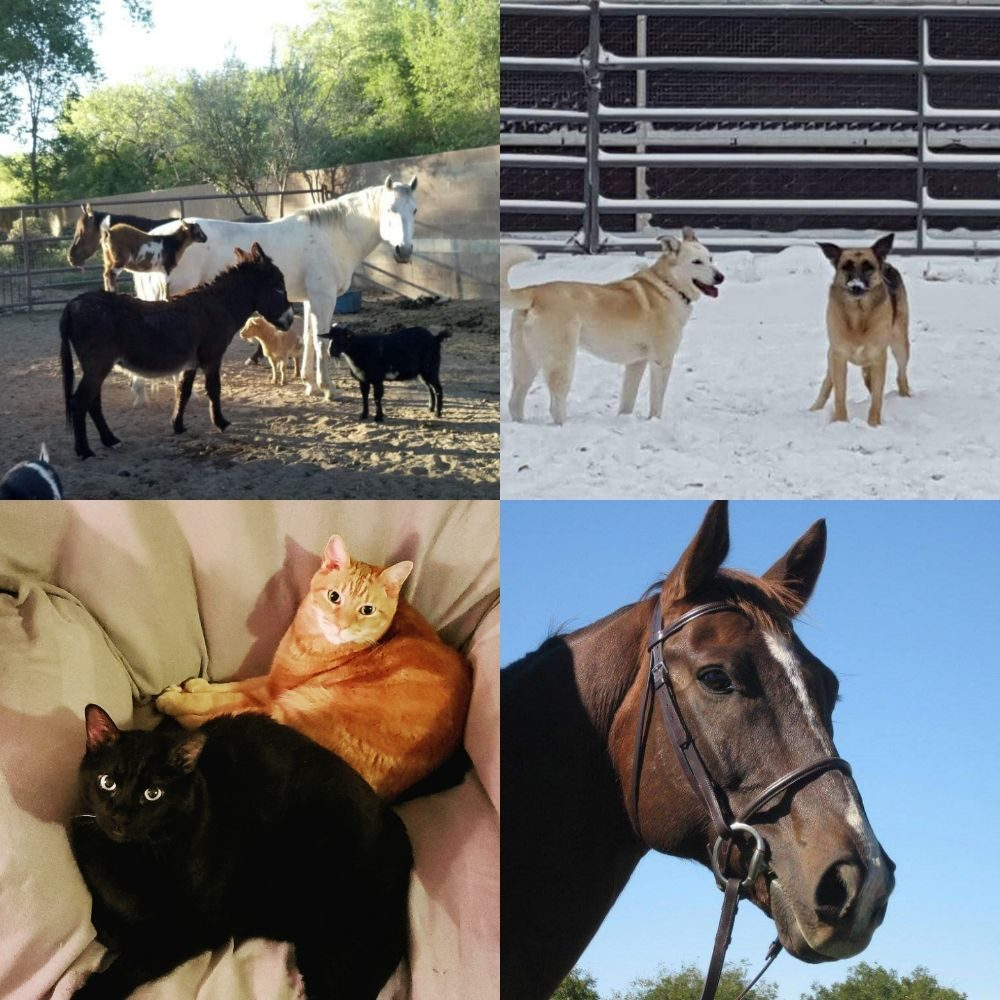 Allison's Petsitting: Corrales, NM