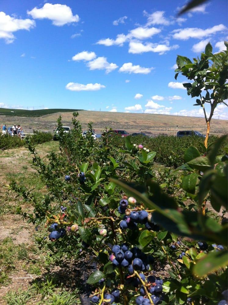 Berry Blue Farms: Burbank, WA