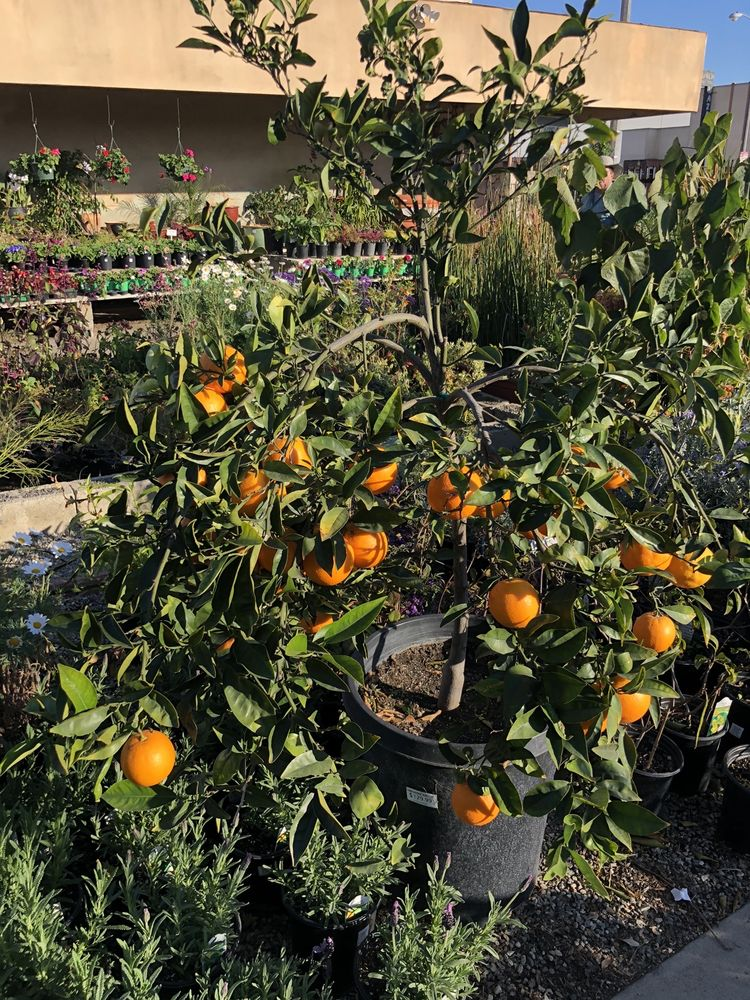 Hawthorne Nursery: 4519 W El Segundo Blvd, Hawthorne, CA