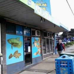 boronia aquarium reptiles aquarium 146 boronia rd. Black Bedroom Furniture Sets. Home Design Ideas
