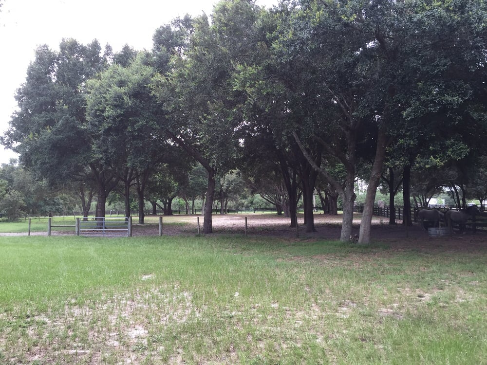 Noel's Tree Service: 13330 S Carolina Ave, Astatula, FL