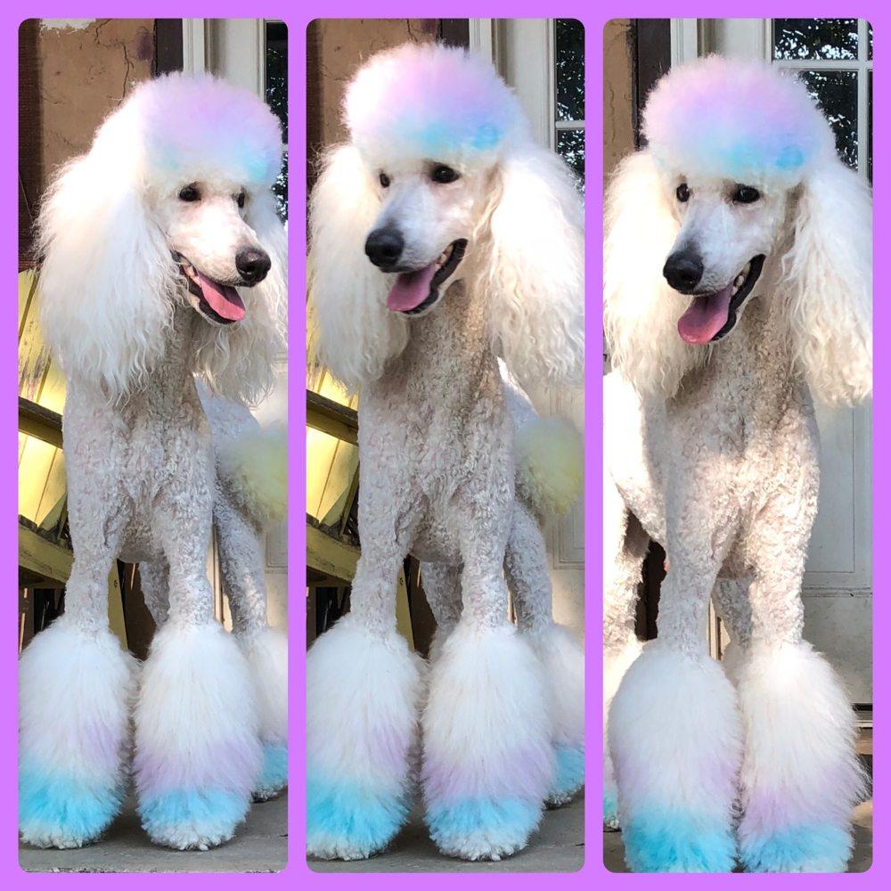 Shampoochie's Dog Grooming: 122 N Main St, Benton, AR