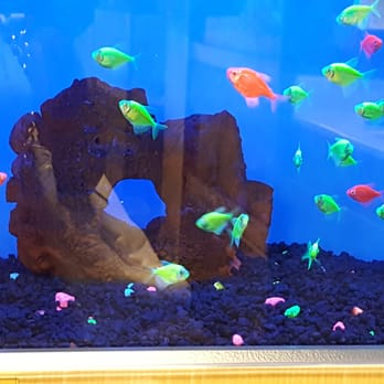 Petco 41 photos 13 reviews pet training 5500 for How much are fish at petco