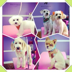 A Pampered Pooch Spa - Pet Groomers - 3654 Youree Dr