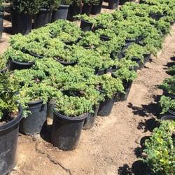 Photo Of Fuku Bonsai Nursery   Gardena, CA, United States