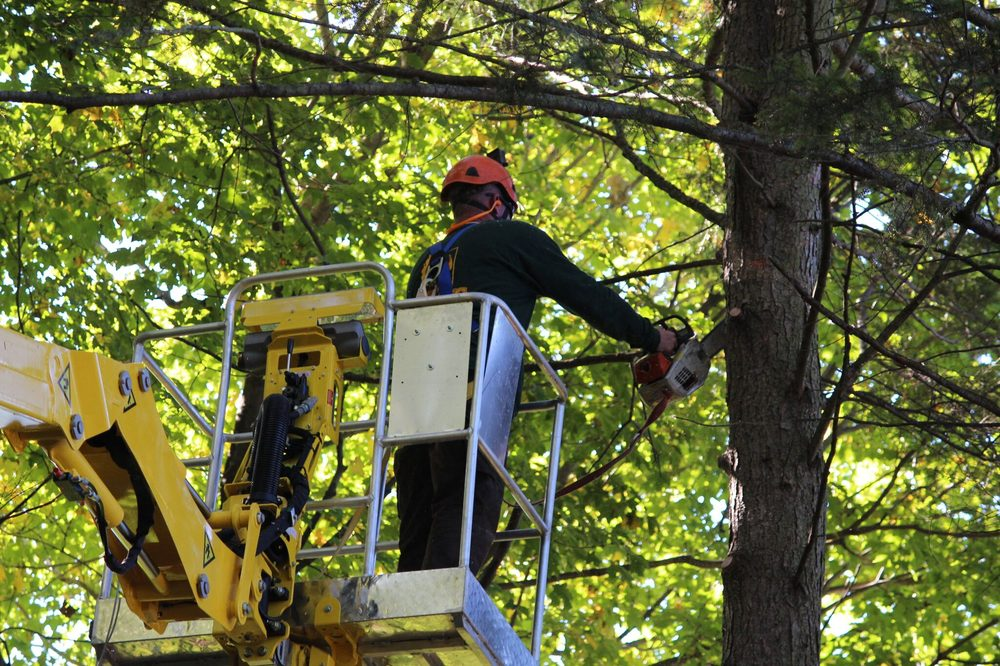 Artistic Tree & Landscape Creations: 4545 Gibsonia Rd, Gibsonia, PA