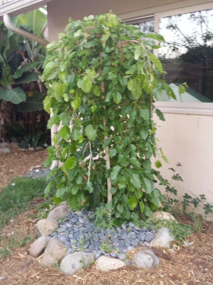 Photo Of Terra Sol Garden Center   Santa Barbara, CA, United States. A