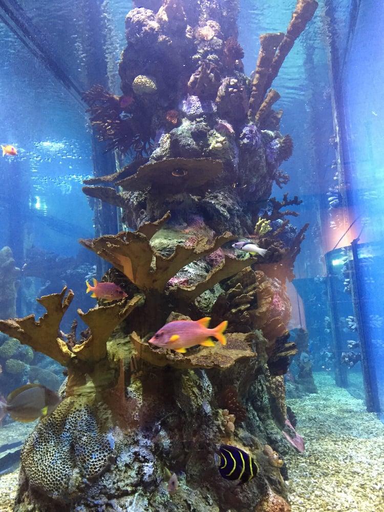 Seafood Restaurants Near Prattville Al