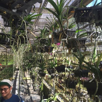 Photo Of Kawamoto Orchid Nursery Honolulu Hi United States Surrounded By Orchids